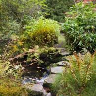 Japanese Water Gardens